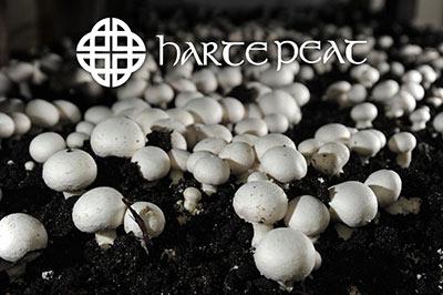 Mushroom Casing