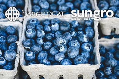 Berry Farming