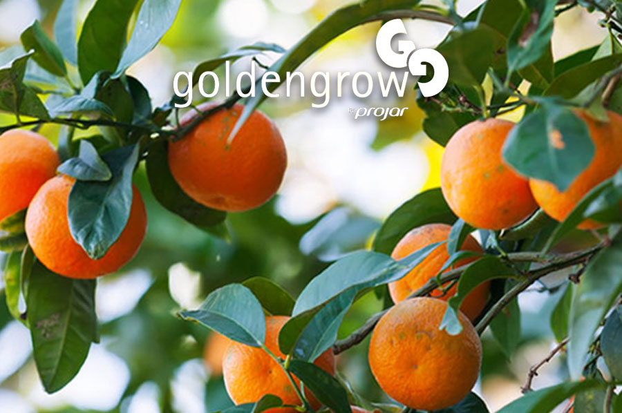 Citrus & Olive Farming