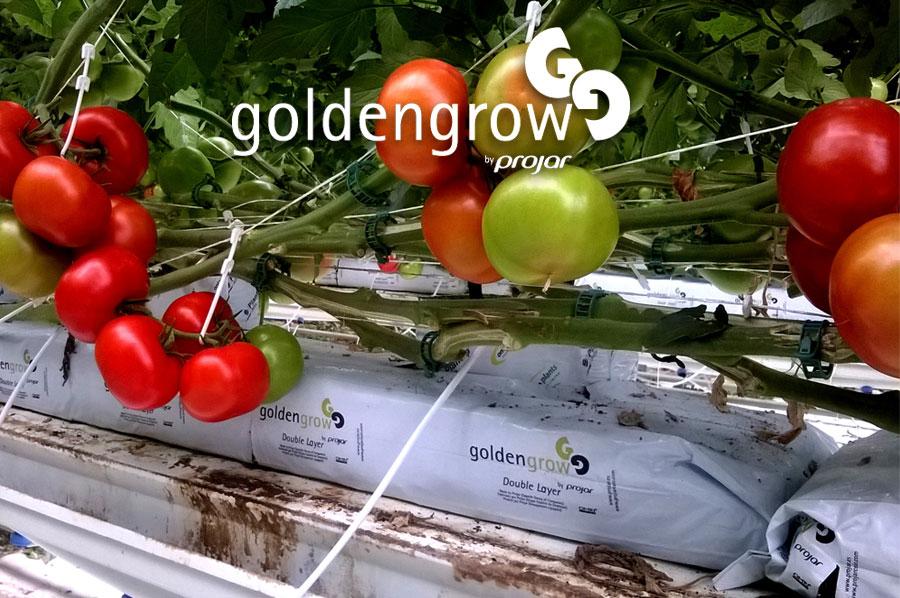Cucumbers, Peppers, Tomatoes, Eggplant & Zucchini